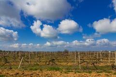 Vignobles criméens en premier ressort Photographie stock libre de droits