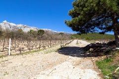Vignobles criméens en premier ressort Photo stock