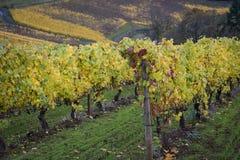 Vignobles d'automne, vallée de Willamette, Orégon photos libres de droits