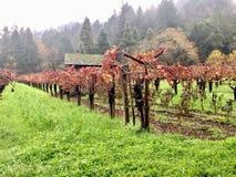 Vignobles dans Images stock