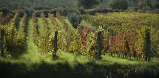 Vignobles dans Chanti, Italie Photos libres de droits