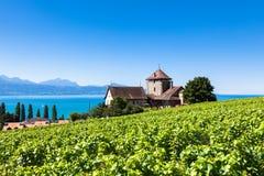 Vignobles dans la région de Lavaux - terrasses de Terrasses de Lavaux, Switz Images stock