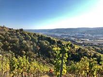 Vignobles dans la région de Stuttgart images stock