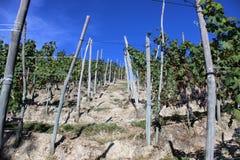 Vignobles dans le belvédère photographie stock