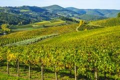 Vignobles dans le chianti Toscane sous un ciel bleu avec les nuages blancs Photographie stock