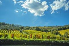 Vignobles dans le chianti Toscane sous un ciel bleu avec les nuages blancs Images stock