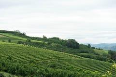 Vignobles dans les collines près du ` de Monticello d alba, Piémont - Italie images stock