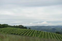 Vignobles dans les collines près du ` de Monticello d alba, Piémont - Italie image stock