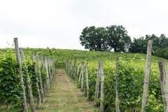 Vignobles dans les collines près du ` de Monticello d alba, Piémont - Italie photos stock