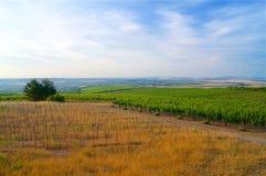 Vignobles dans les sud Moravie de République Tchèque photographie stock