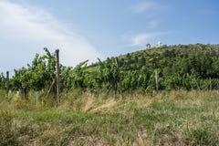 Vignobles dans Mikulov, République Tchèque Images libres de droits