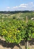 Vignobles dans Oltrepo Pavese (Italie) Photos libres de droits