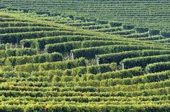 Vignobles de Barolo Image libre de droits