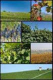 Vignobles de Barolo Photo libre de droits