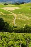 Vignobles de Beaujolais, France Photos stock