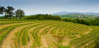 Vignobles de Collio photos stock