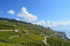 Vignobles de Corniche Lavaux photographie stock libre de droits