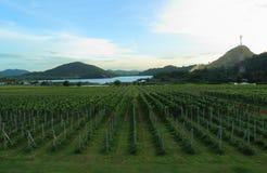 Vignobles de jardin sur une colline photographie stock