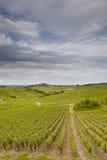 Vignobles de JLoire Photographie stock