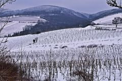 Vignobles de Kahlenberg en hiver photos libres de droits
