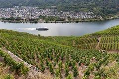Vignobles de la Moselle photographie stock libre de droits