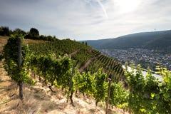 Vignobles de la Moselle images stock