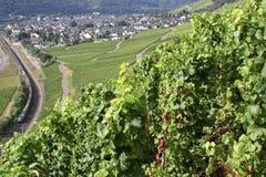 Vignobles de la Moselle image libre de droits