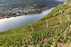 Vignobles de la Moselle images libres de droits