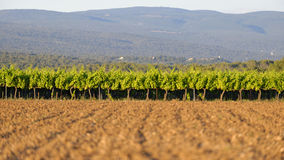 Vignobles de la Provence Photos stock