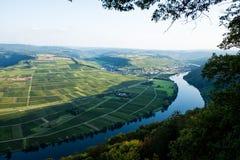 Vignobles de la vallée de la Moselle en Allemagne photo stock