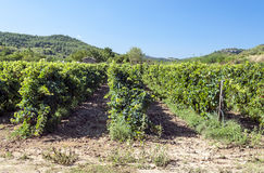Vignobles de Lagrasse Photographie stock
