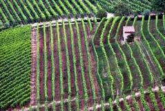 Vignobles de langhe Photographie stock