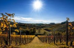 Vignobles de Langhe Piémont, Italie en automne Photo libre de droits