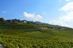Vignobles de Lavaux Photo libre de droits