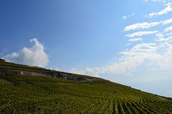 Vignobles de Lavaux Photographie stock libre de droits