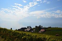 Vignobles de Lavaux Image libre de droits