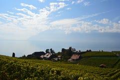 Vignobles de Lavaux Image stock