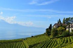 Vignobles de Lavaux Images libres de droits