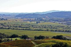 Vignobles de Napa Valley Image libre de droits