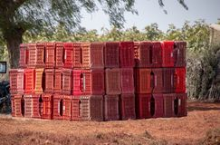 Vignobles de Paracas, Pérou photo stock