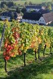 Vignobles de Rheingau Images libres de droits