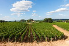 Vignobles de Saint Emilion, France Images libres de droits
