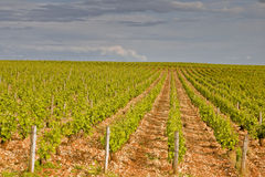 Vignobles de Sancerre photo stock