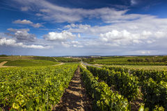 Vignobles de Sancerre images stock