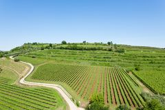 Vignobles de Soave Vin italien photos stock