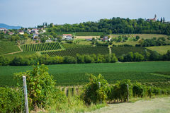 Vignobles de Valdobbiadene, Vénétie, Italie Images stock
