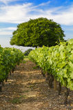 Vignobles de village de Frontenas, Beaujolais, France Photo stock