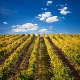 Vignobles de vin de port au Portugal image libre de droits