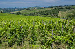 Vignobles du Toscan de champ de chianti image libre de droits