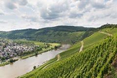Vignobles en Allemagne le long de rivière la Moselle près de Punderich Images stock